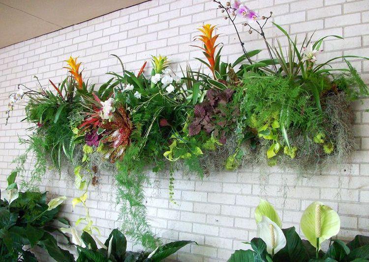 Plantas para jardim vertical sombra v rias - Plantas para pleno sol ...