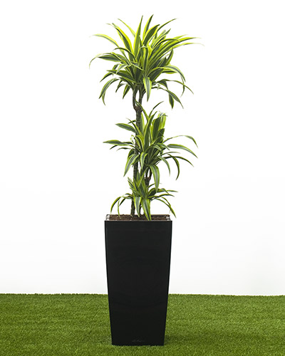 Plantas para dentro de casa flores cultura mix Tall narrow indoor plants