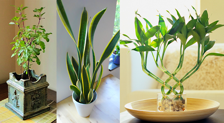 how to keep money plant in house