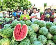 Organic farming adds value to crops in Isabela town