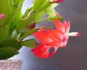 2633870.Plante_fleur_rouge_11_Zwpb
