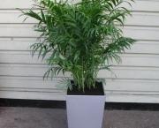 palmeira-chamaedorea-ideal-para-espacos-internos (6)