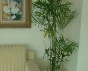 palmeira-chamaedorea-ideal-para-espacos-internos (10)