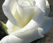 Significado da Rosa Branca na Macumba (2)