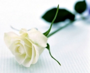 Significado da Rosa Branca na Macumba (7)
