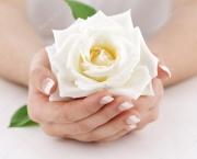 Significado da Rosa Branca na Macumba (8)