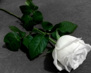 Significado da Rosa Branca na Macumba (11)