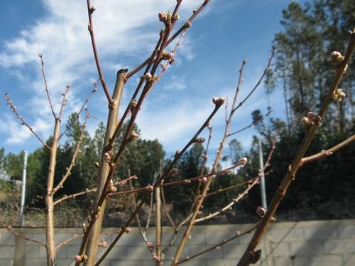 Truques para podar a macieira flores cultura mix - Poda de hortensias epoca ...