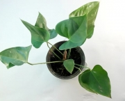 670px-Repot-a-Plant-Step-1-preview